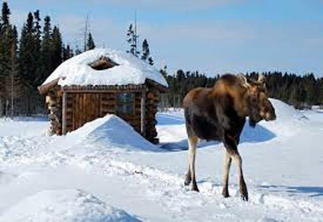 Schneelanschaft und Tier