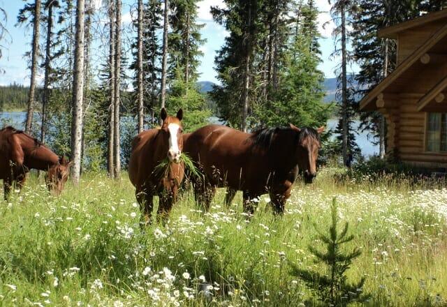 Pferde Ten-ee-ah Lodge